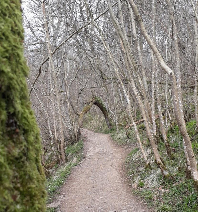 "alt+""meandering pathway at Hareshaw Linn"""