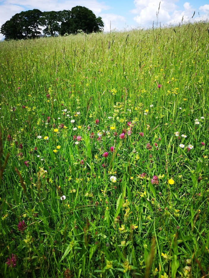 "alt=""wildflowers in hay meadow contributing to sustainable rural tourism"""