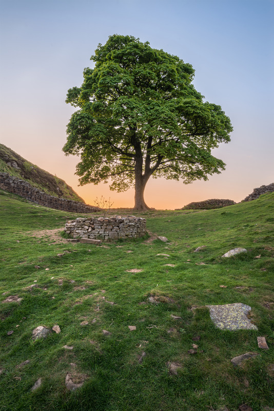 "alt=""sycamore gap in glow"""
