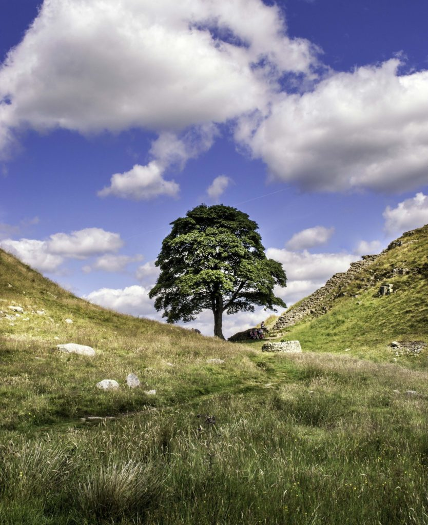 "alt=""sycamore gap blue skies"""