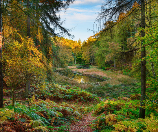 "alt=""staward gorge and allen banks autumn walks"""